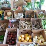 veggies.w