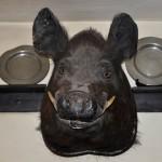 wild.boar.w