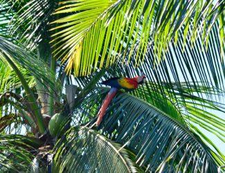 CR.macaw