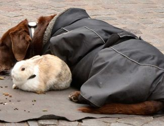 dog.bunny.1