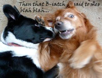 dogs.blah.