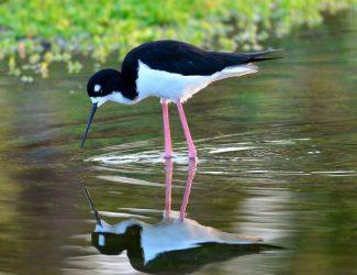 bird.reflect.JMundy